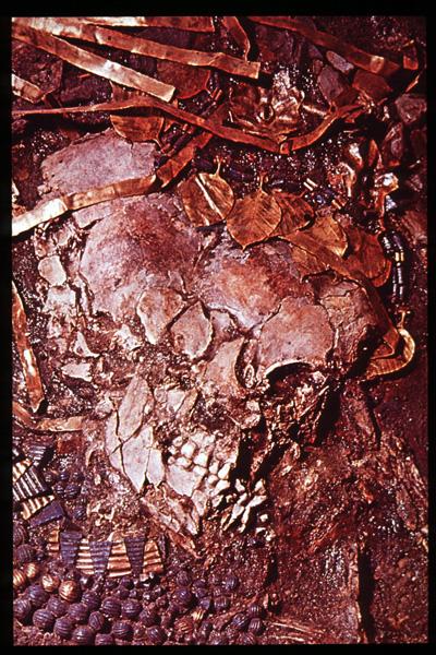 Crushed Skull Crushed ...